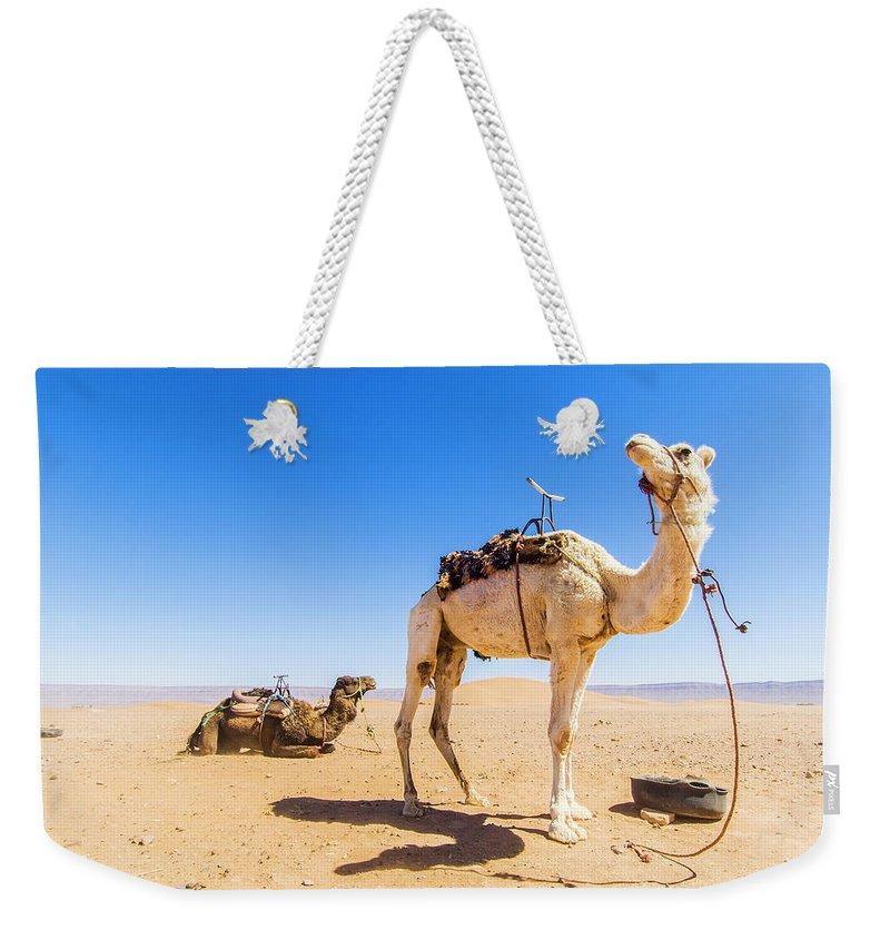 Working Animal Weekender Tote Bag featuring the photograph Draa Valley, Camel At Tinfou by Maremagnum