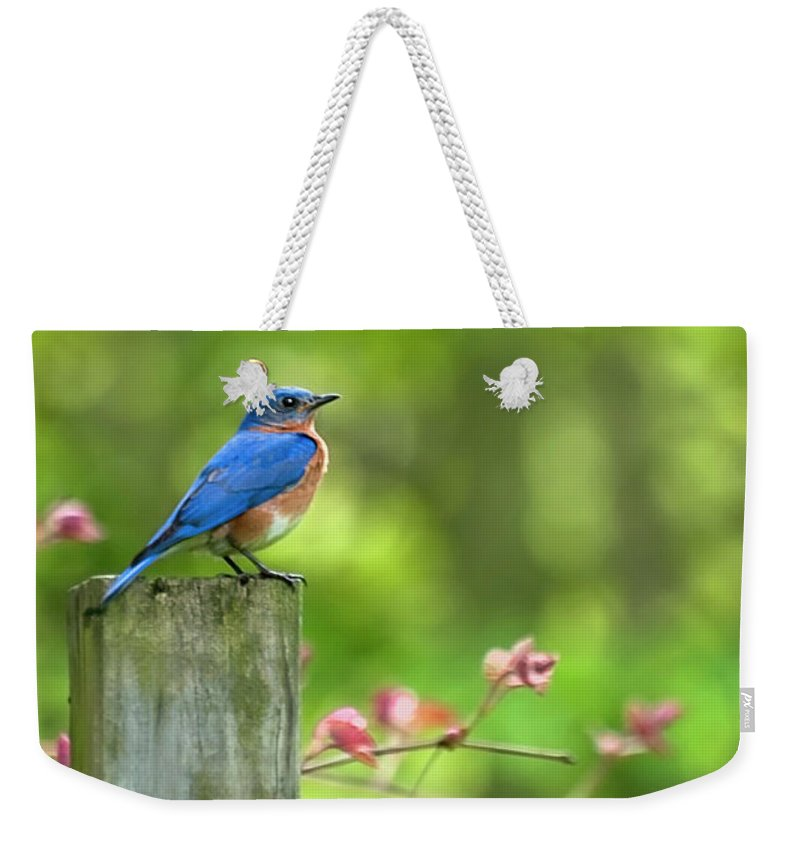 Bluebird Weekender Tote Bag featuring the photograph Eastern Bluebird by Christina Rollo