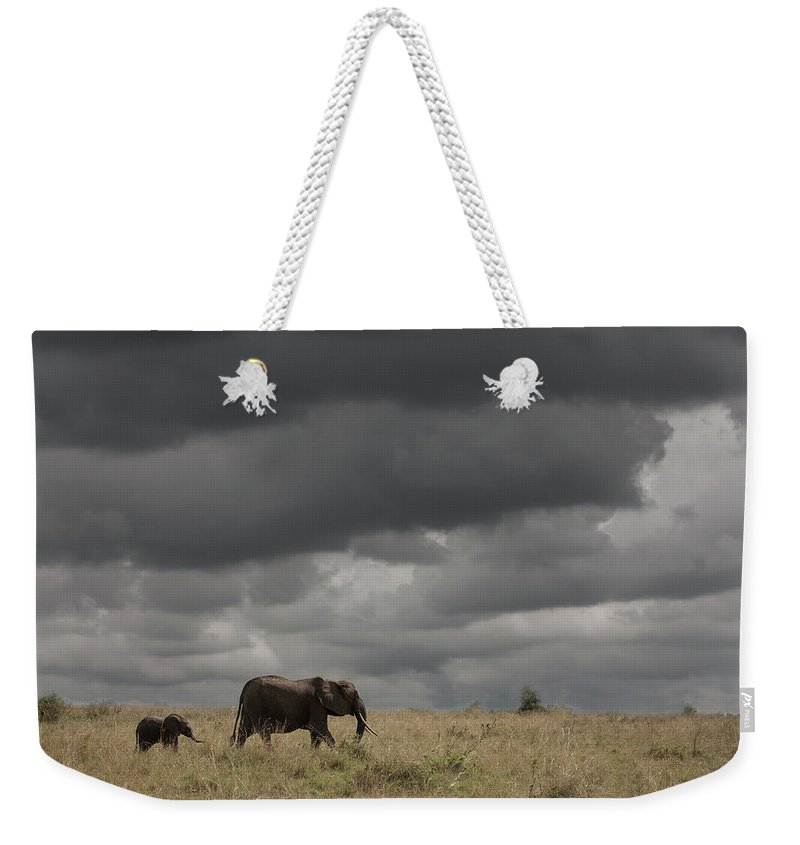 Kenya Weekender Tote Bag featuring the photograph Elephant Under Cloudy Sky by Buena Vista Images