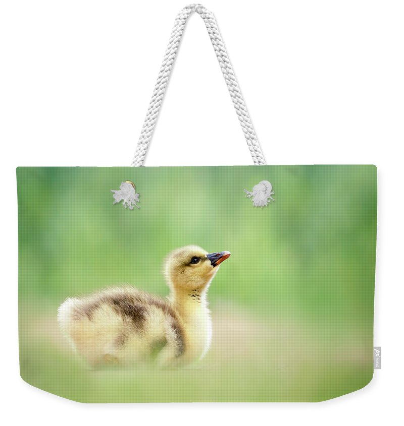 Gosling Weekender Tote Bag featuring the photograph Facing A Brand New Future by Roeselien Raimond