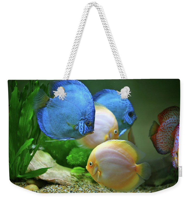 Underwater Weekender Tote Bag featuring the photograph Fish In Water by Vietnam