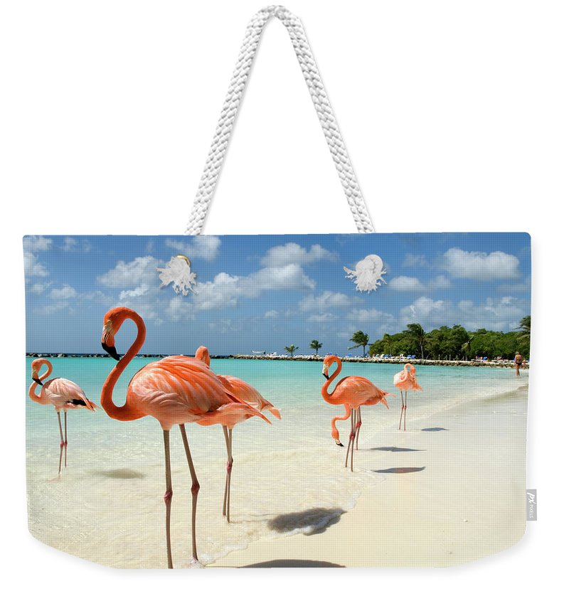 Shadow Weekender Tote Bag featuring the photograph Flamingos On The Beach by Vanwyckexpress