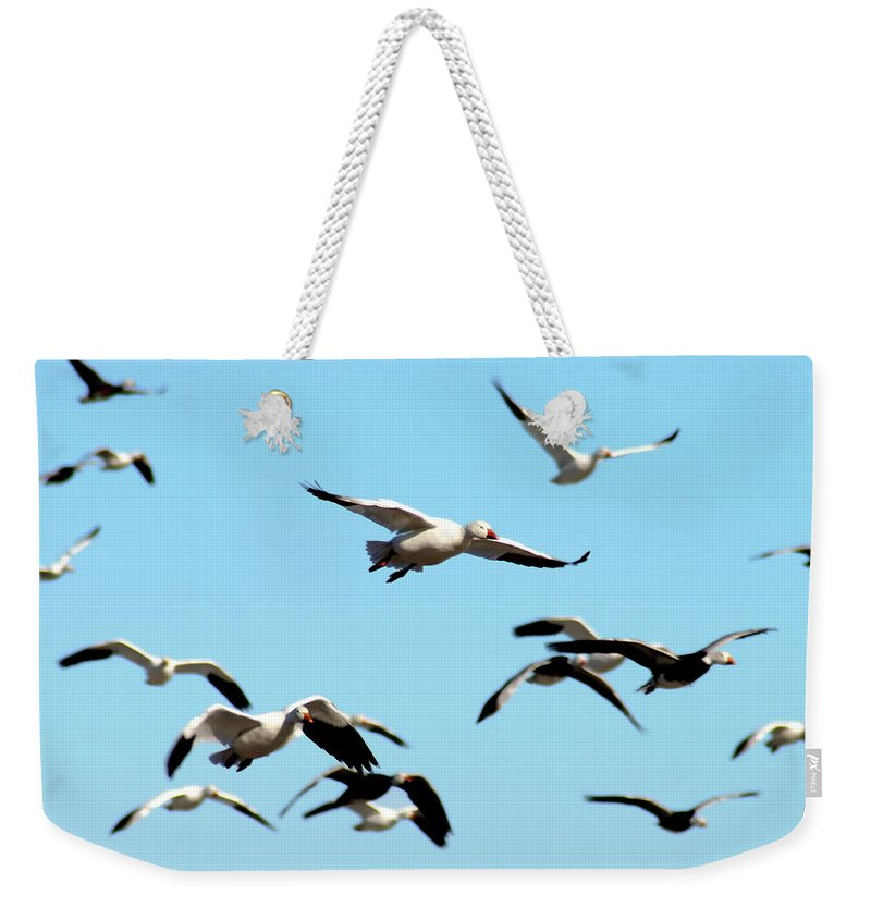 Geese Weekender Tote Bag featuring the photograph Flock In Flight by Steve Karol