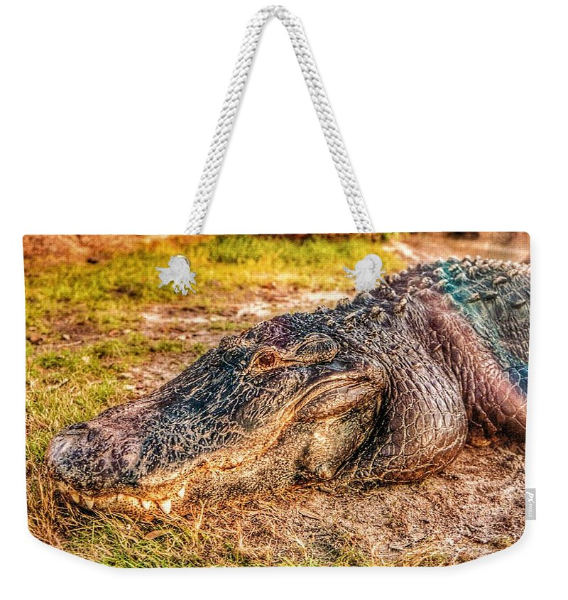 Florida Weekender Tote Bag featuring the photograph Florida Gator 1 by Tommy Anderson