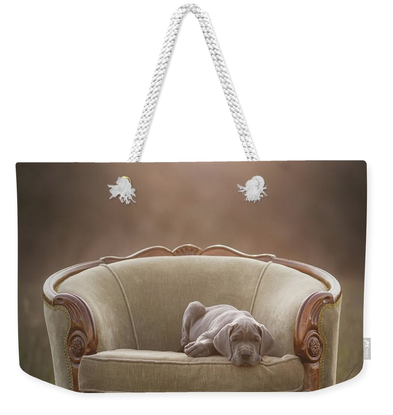 Sofa Weekender Tote Bag featuring the photograph Floyd by Mike Bons