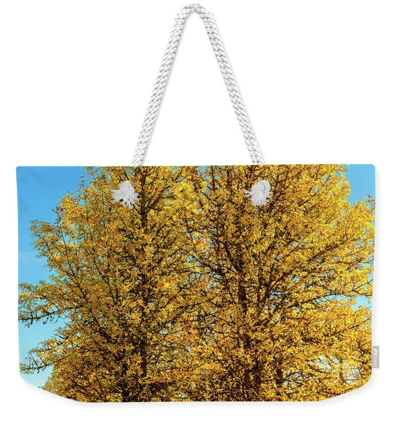 Landscape Weekender Tote Bag featuring the photograph Foliage by Dheeraj Mutha