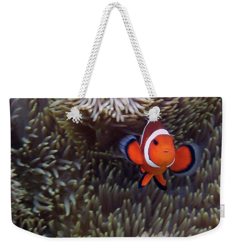 Underwater Weekender Tote Bag featuring the photograph Found Nemo by Klaus Brandstaetter