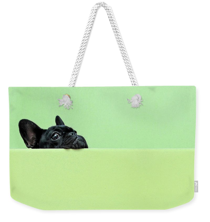 Pets Weekender Tote Bag featuring the photograph French Bulldog Puppy by Retales Botijero