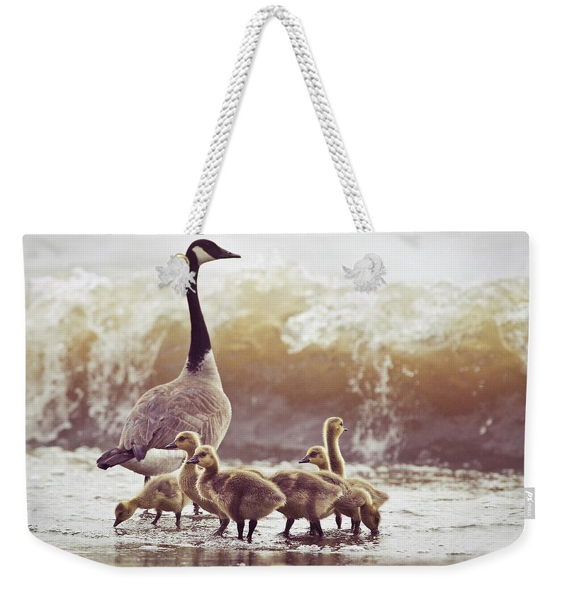 Lake Ontario Weekender Tote Bag featuring the photograph Gaggle by Photogodfrey