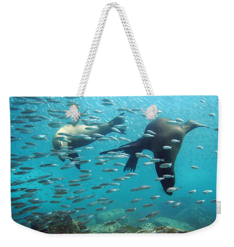 Underwater Weekender Tote Bag featuring the photograph Galapagos Sea Lion by Bettina Lichtenberg