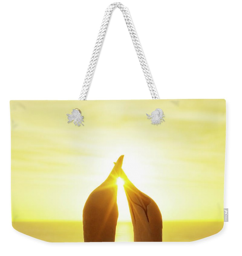 Care Weekender Tote Bag featuring the photograph Gannets Greeting Each Other Between by Jason Hosking