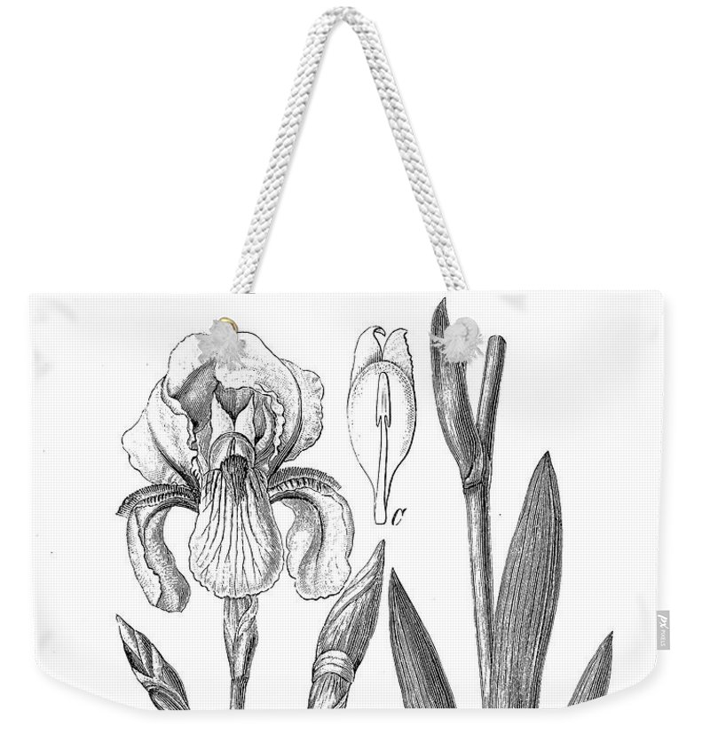 German Iris Weekender Tote Bag featuring the digital art German Iris, Botanical Vintage Engraving by Luisa Vallon Fumi