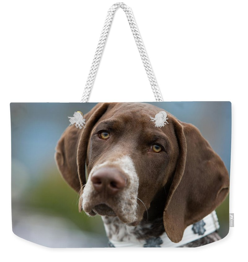 Pets Weekender Tote Bag featuring the photograph German Shorthair Pointer With Building by Markhatfield