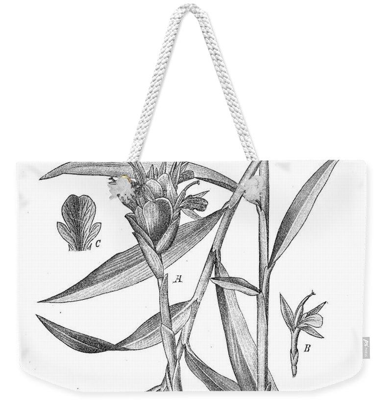 Ginger Root Weekender Tote Bag featuring the digital art Ginger,botanical Vintage Engraving by Luisa Vallon Fumi