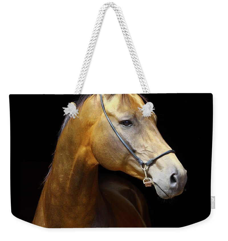 Horse Weekender Tote Bag featuring the photograph Golden Horse by Photographs By Maria Itina