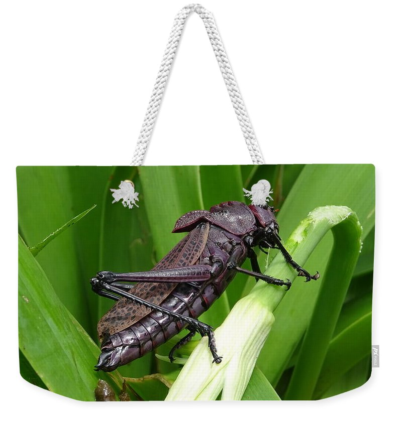Weekender Tote Bag featuring the photograph Grasshopper by Stanley Vreedeveld