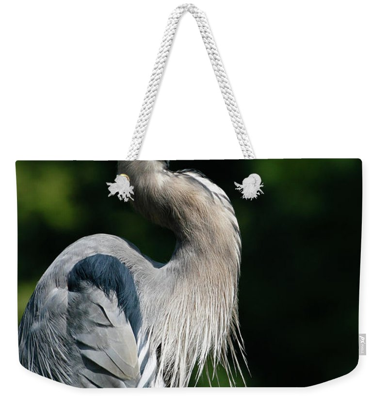 North Carolina Weekender Tote Bag featuring the photograph Great Blue Heron by Bill Swindaman