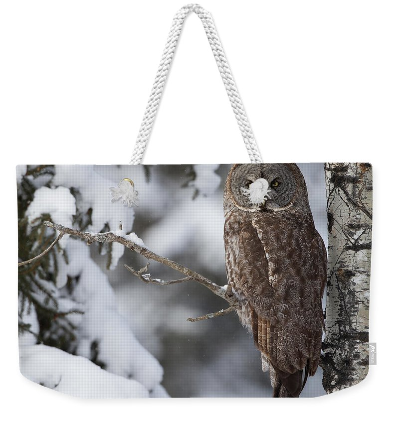 Snow Weekender Tote Bag featuring the photograph Great Grey Owl by Corey Hayes