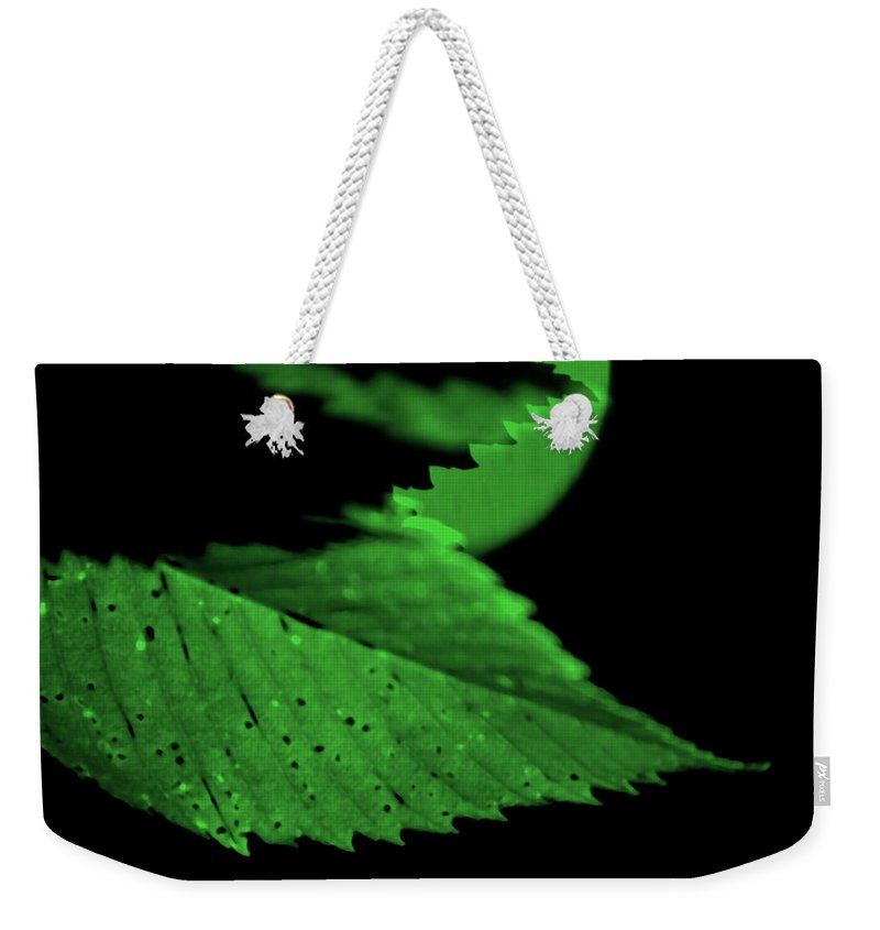 Leaf Weekender Tote Bag featuring the photograph Green Leaf in Sun by Lonnie Paulson