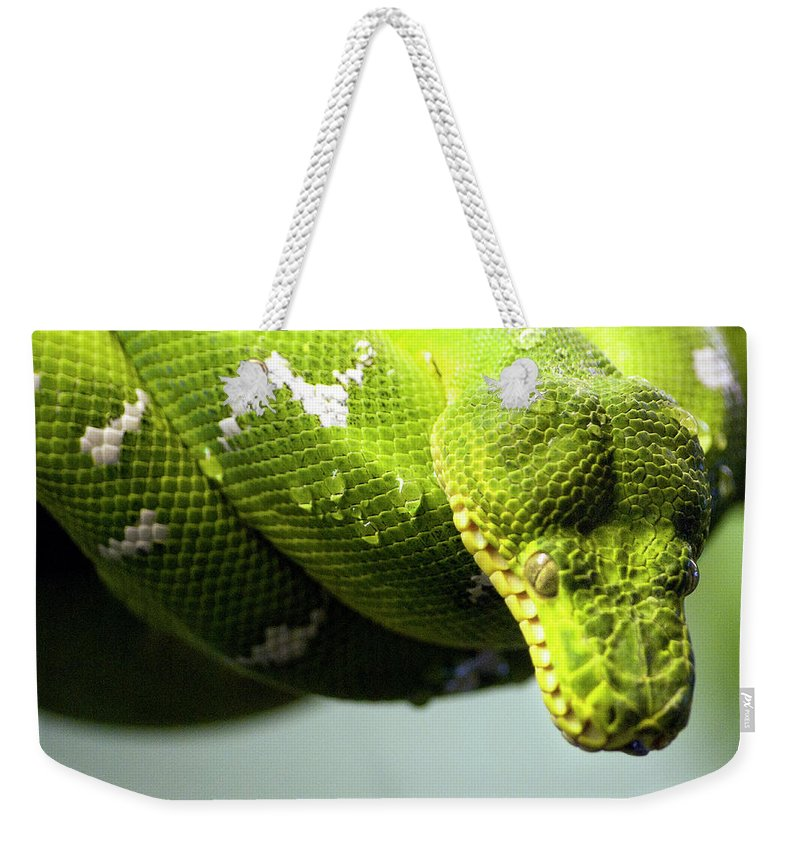Toronto Weekender Tote Bag featuring the photograph Green Snake Curled And Resting by Gail Shotlander