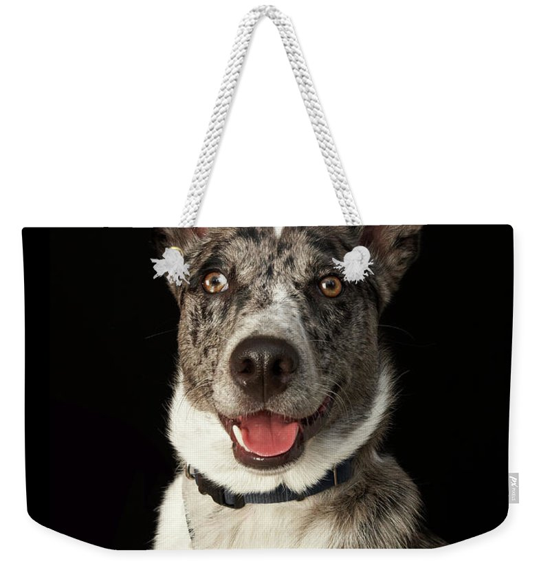Pets Weekender Tote Bag featuring the photograph Grey And White Australian Shepherd With by M Photo