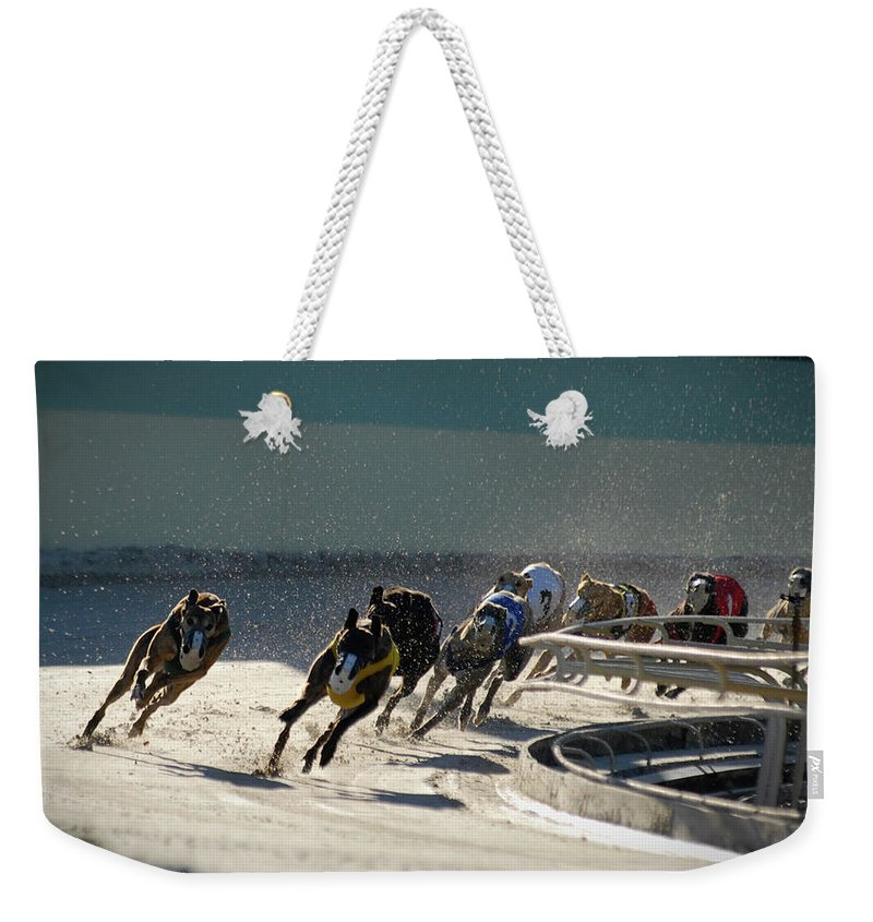Dust Weekender Tote Bag featuring the photograph Greyounds 3 Of 7 by Dplight