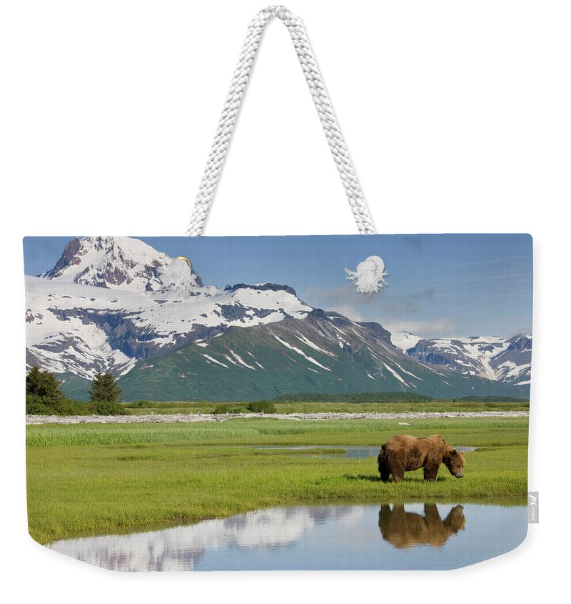 Brown Bear Weekender Tote Bag featuring the photograph Grizzly Bear, Katmai National Park by Paul Souders