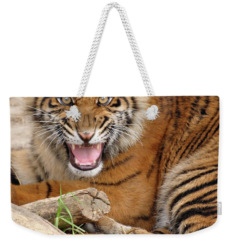 Snarling Weekender Tote Bag featuring the photograph Growling Tiger by S. Greg Panosian