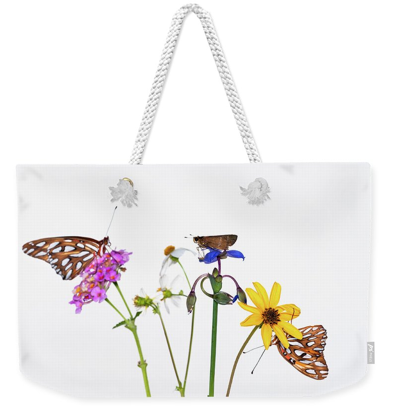 White Background Weekender Tote Bag featuring the photograph Gulf Fritillary And Brown Skipper by Jim Mckinley