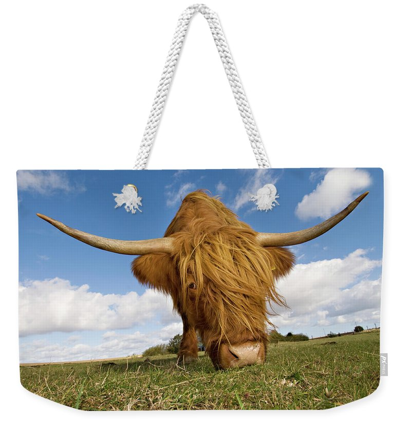 Horned Weekender Tote Bag featuring the photograph Hairy, Horned, Highland Cow Grazing by Clarkandcompany