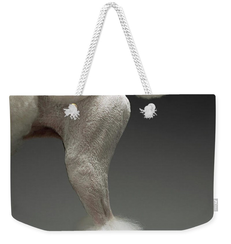 Pets Weekender Tote Bag featuring the photograph Haunches Of Poodle, On Grey Background by Moodboard