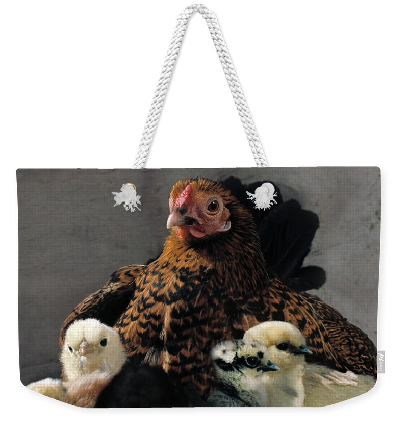 Copenhagen Weekender Tote Bag featuring the photograph Hen With Chicks by Muriel De Seze