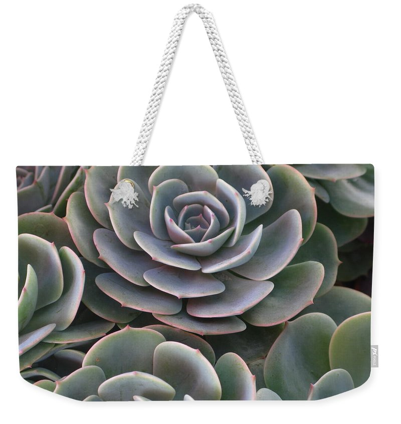 Scenics Weekender Tote Bag featuring the photograph Hens And Chicks Plant Full Frame by Sassy1902