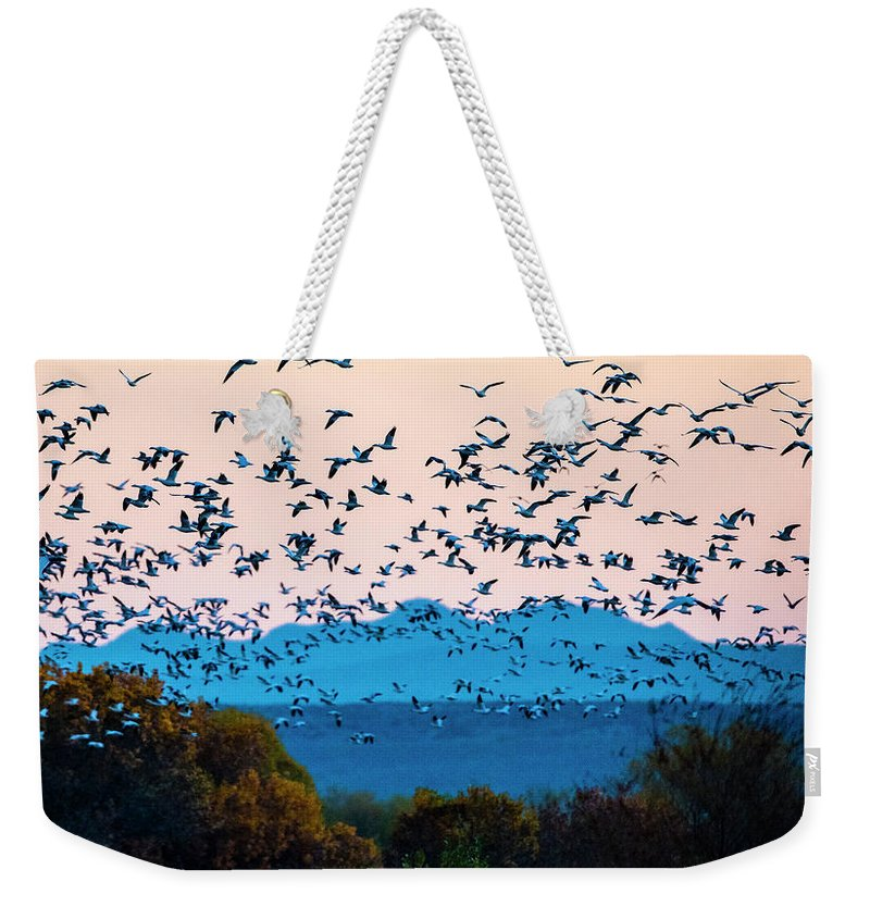 Photography Weekender Tote Bag featuring the photograph Herd Of Snow Geese In Flight, Soccoro by Panoramic Images
