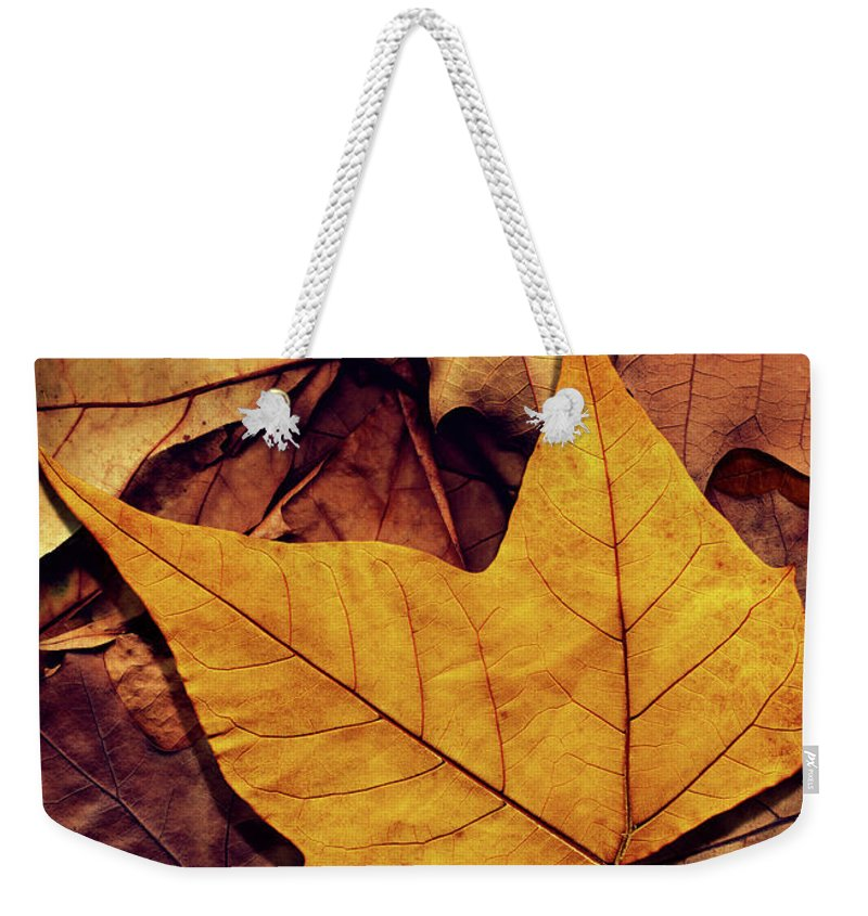 Orange Color Weekender Tote Bag featuring the photograph High Resolution Dry Maple Leaf On by Miroslav Boskov