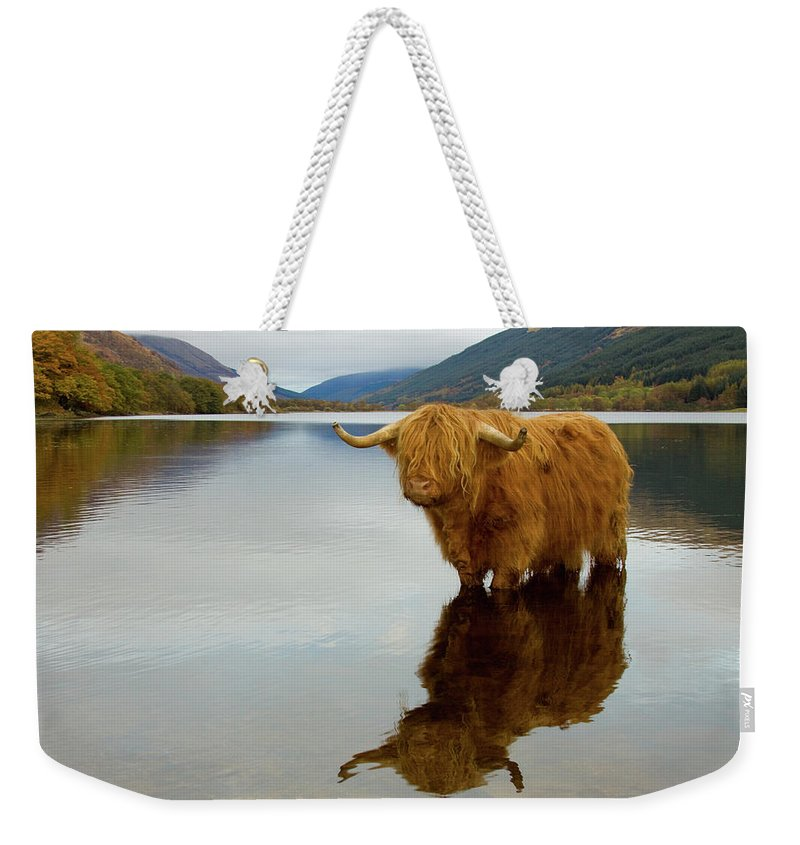 Horned Weekender Tote Bag featuring the photograph Highland Cow by Empato