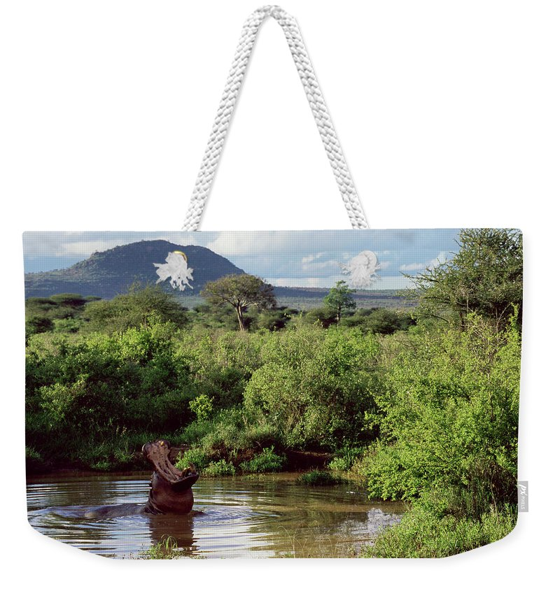 Scenics Weekender Tote Bag featuring the photograph Hippopotamus Emerging From Water, Mouth by James Warwick