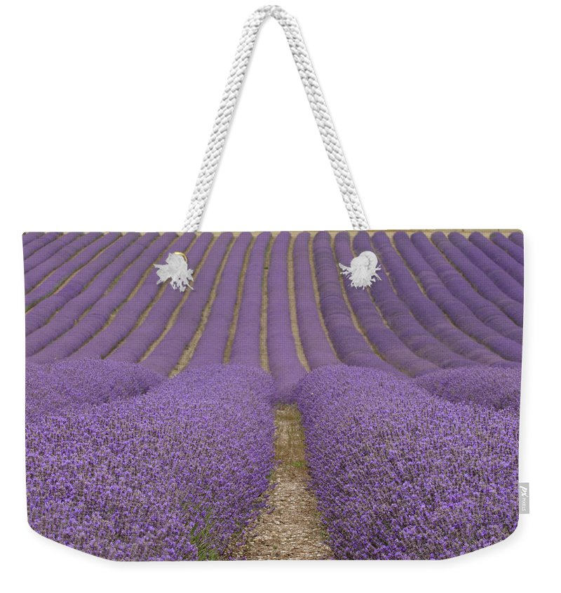 In A Row Weekender Tote Bag featuring the photograph Hitchin Lavender by Photo © Stephen Chung