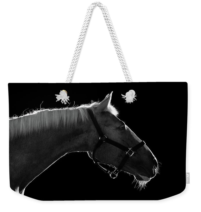 Horse Weekender Tote Bag featuring the photograph Horse by Arman Zhenikeyev - Professional Photographer From Kazakhstan