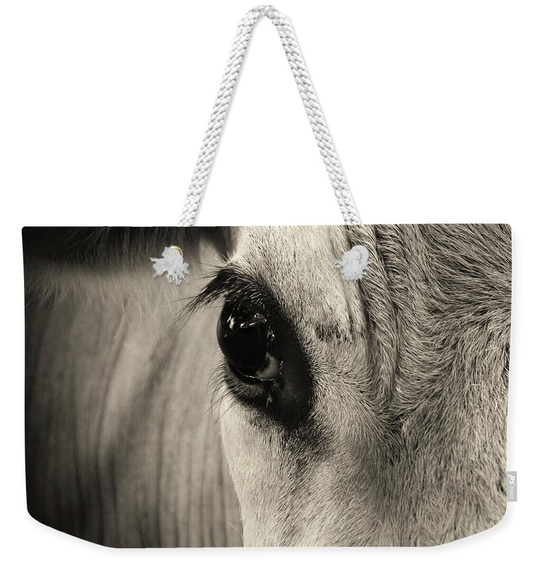 Horse Weekender Tote Bag featuring the photograph Horse Eye by Karena Goldfinch