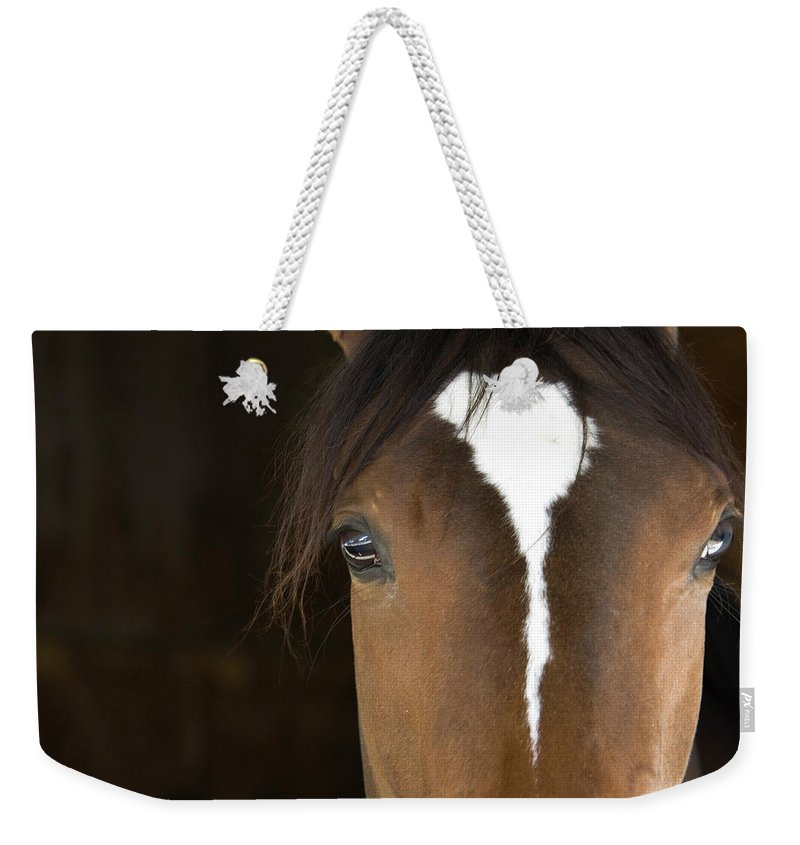 Horse Weekender Tote Bag featuring the photograph Horse Head by Rterry126