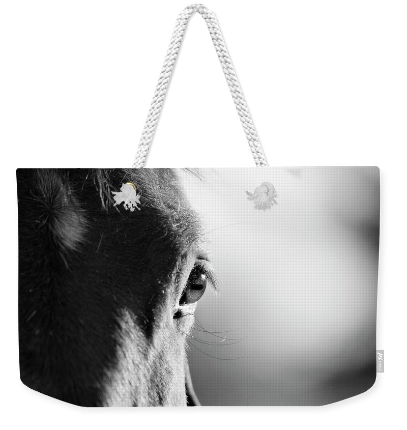 Horse Weekender Tote Bag featuring the photograph Horse In Black And White by Malcolm Macgregor