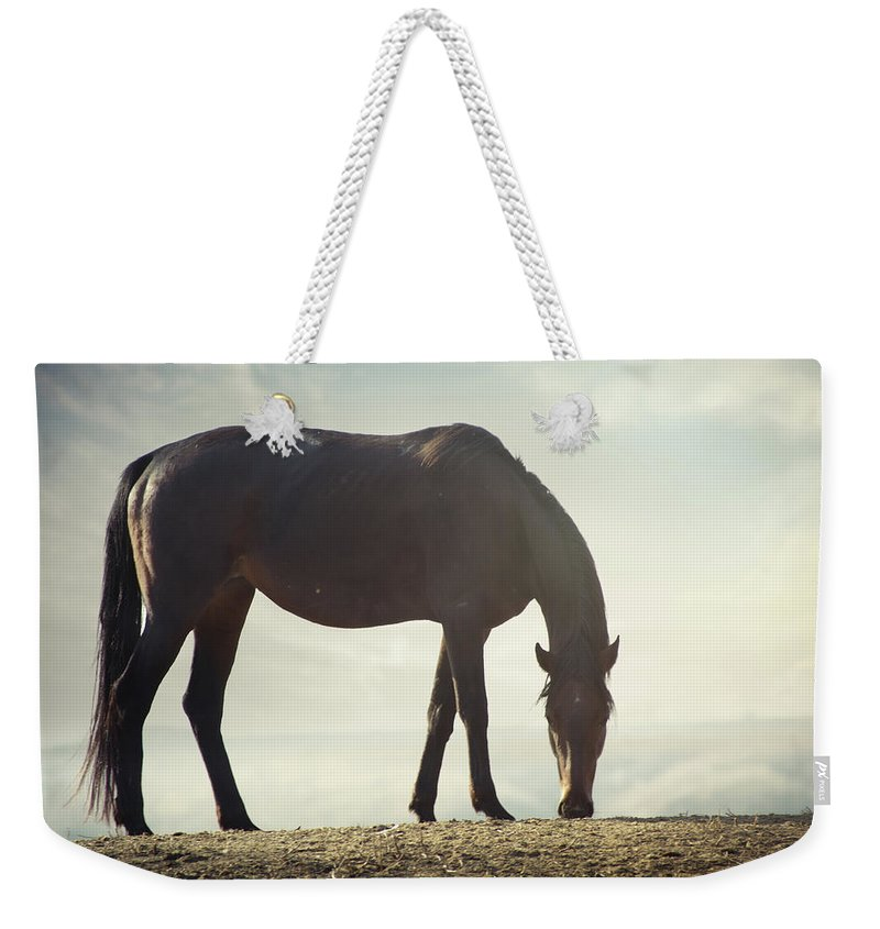 Horse Weekender Tote Bag featuring the photograph Horse In Wild by Arman Zhenikeyev - Professional Photographer From Kazakhstan