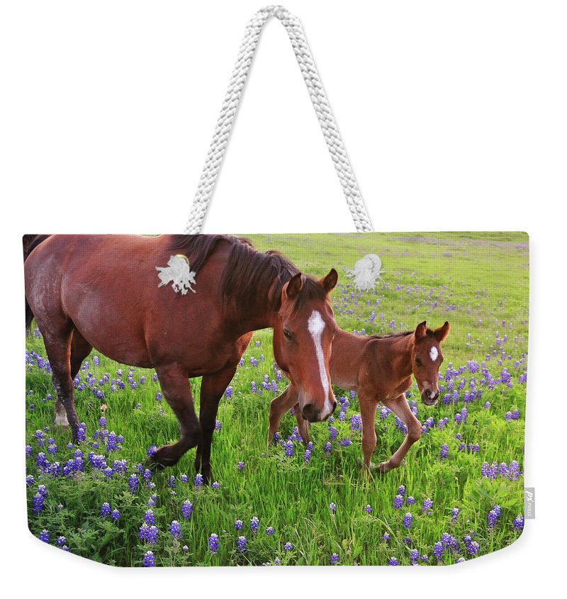 Horse Weekender Tote Bag featuring the photograph Horse On Bluebonnet Trail by David Hensley