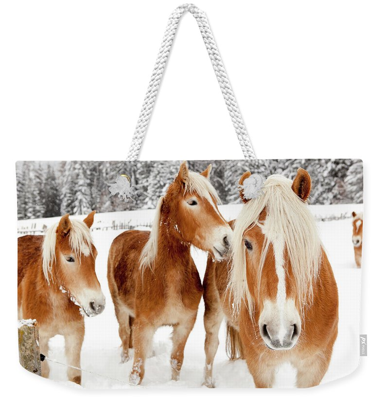 Horse Weekender Tote Bag featuring the photograph Horses In White Winter Landscape by Angiephotos