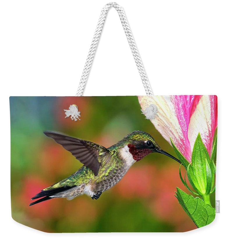 Animal Themes Weekender Tote Bag featuring the photograph Hummingbird Feeding On Hibiscus by Dansphotoart On Flickr