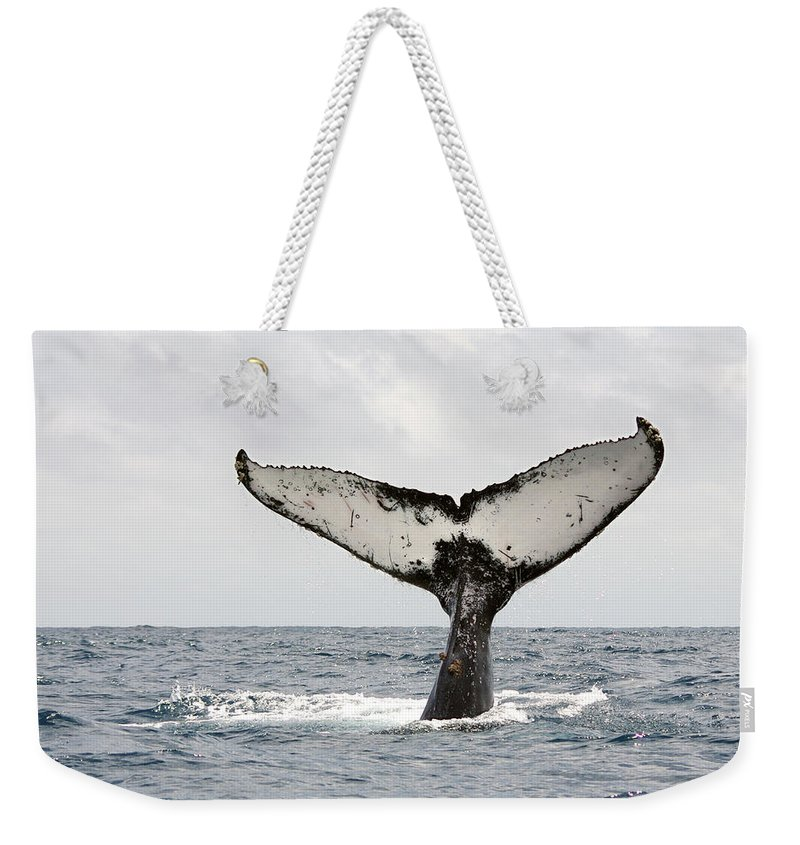 Animal Themes Weekender Tote Bag featuring the photograph Humpback Whale Tail by Photography By Jessie Reeder