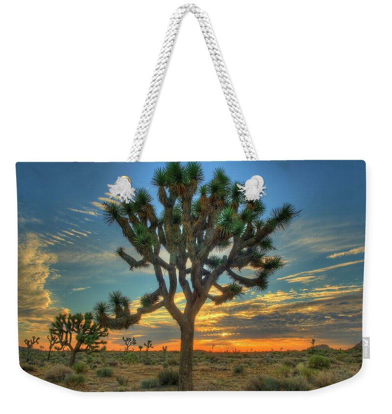 Scenics Weekender Tote Bag featuring the photograph Joshua Tree At Sunrise by Photograph By Kyle Hammons