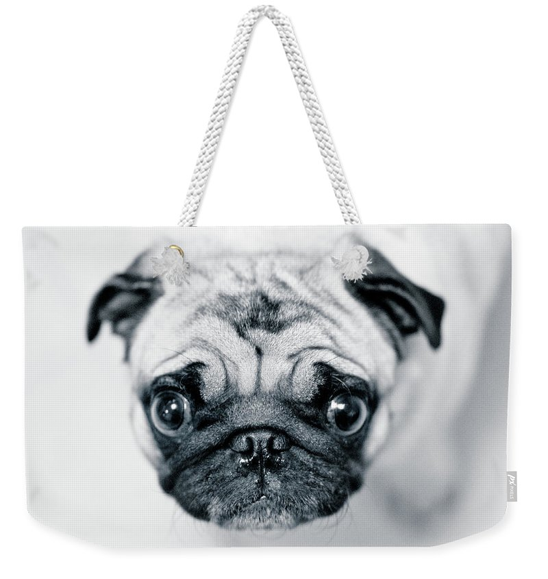 Pets Weekender Tote Bag featuring the photograph Just Enough by Eddy Joaquim