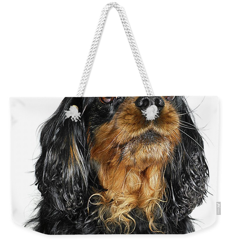 Pets Weekender Tote Bag featuring the photograph King Charles Cavalier Portrait by Gandee Vasan
